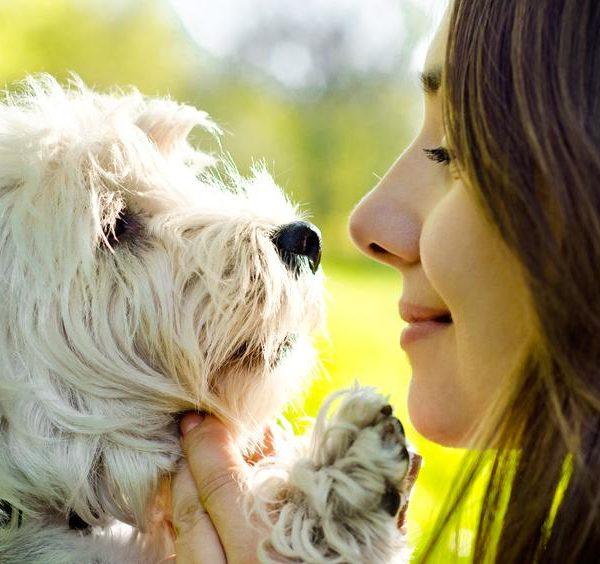 Tiere verstehen Hund
