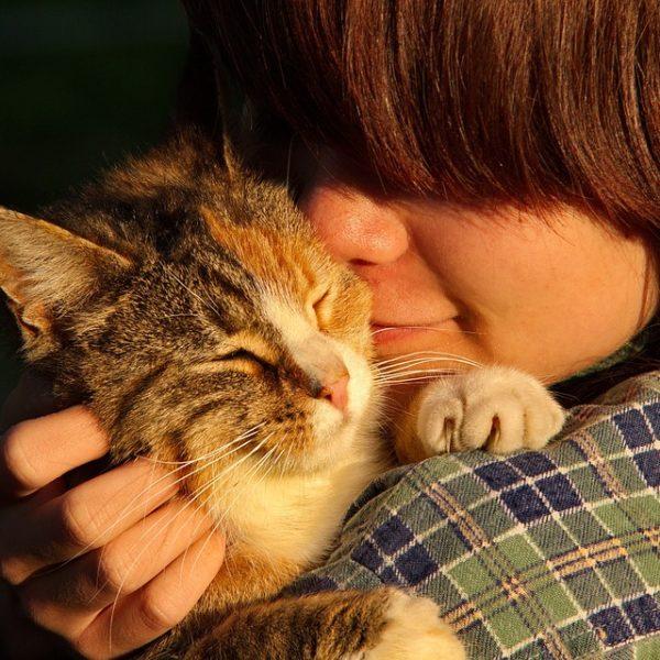Tiere verstehen Katze
