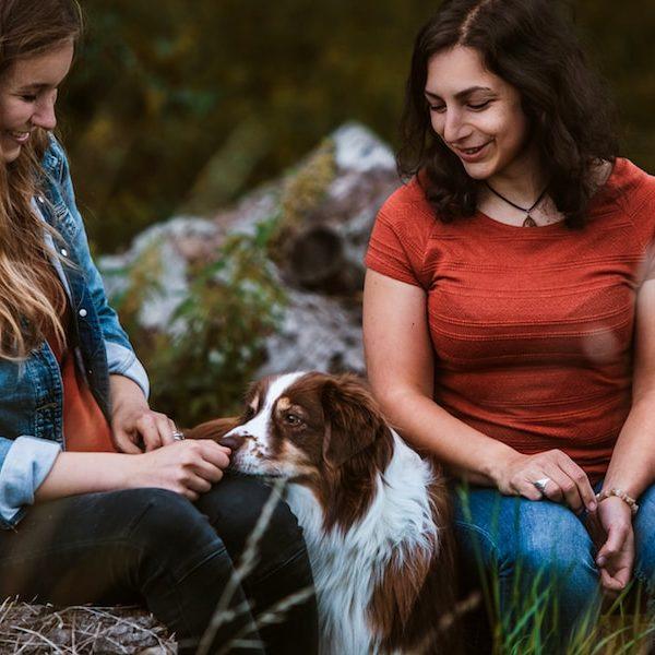 Tier verstehen Tierhaltercoaching Hund