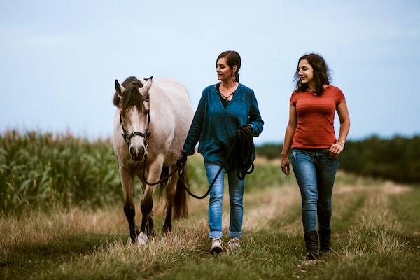 Tier verstehen Pferd Coaching