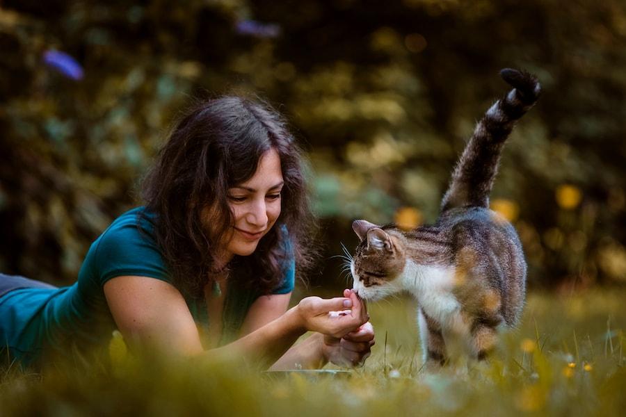 Tier verstehen Tierkommunikation Katze