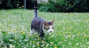 Seelenfreunde Katze
