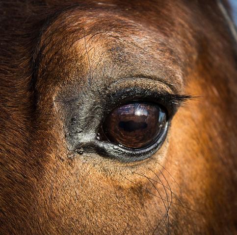 Tier verstehen Krankheit