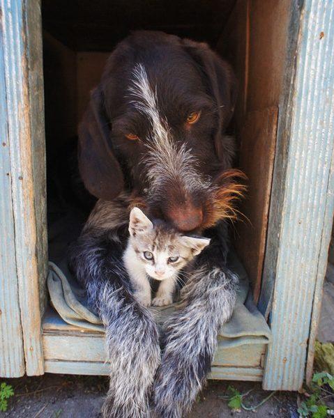 Tier verstehen Zusammenführung