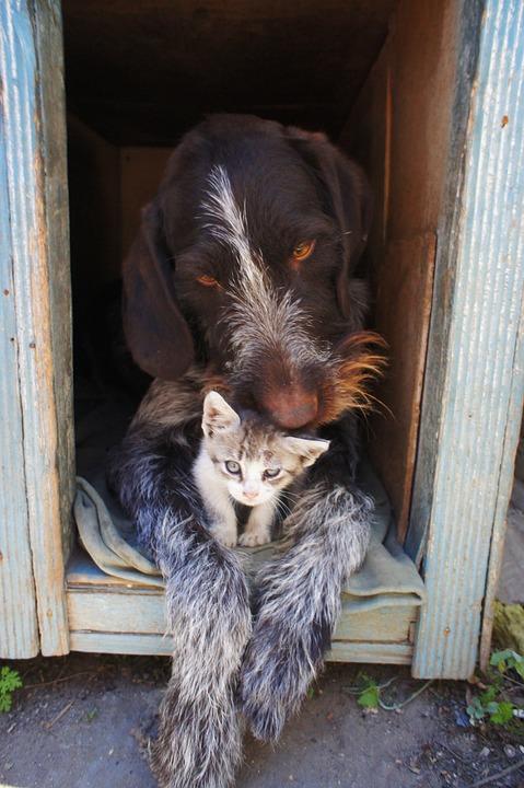 Zusammenführung Hund Katze