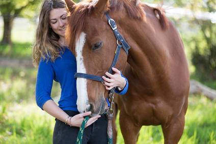 Pferd Krankheit