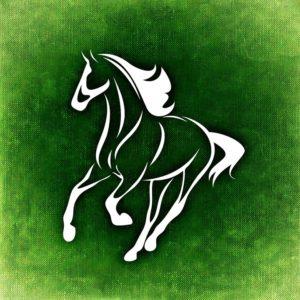 Tier Pferd Freiheit