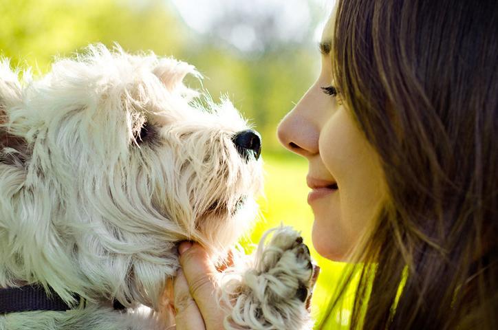 Hund Tiere verstehen