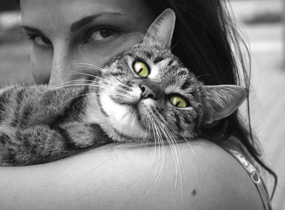 Verstehe die Welt deines Tiers