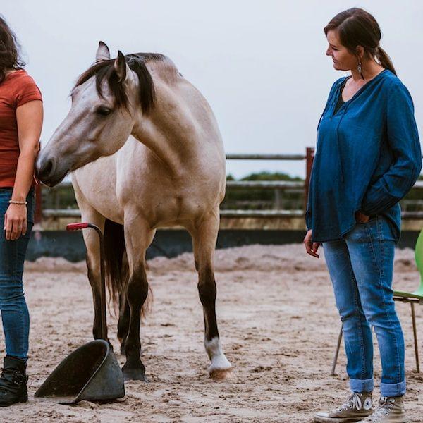 Tier verstehen Aufstellung Pferd