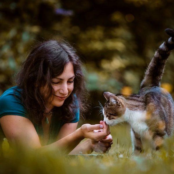 Tier verstehen Katze Tierkommunikation