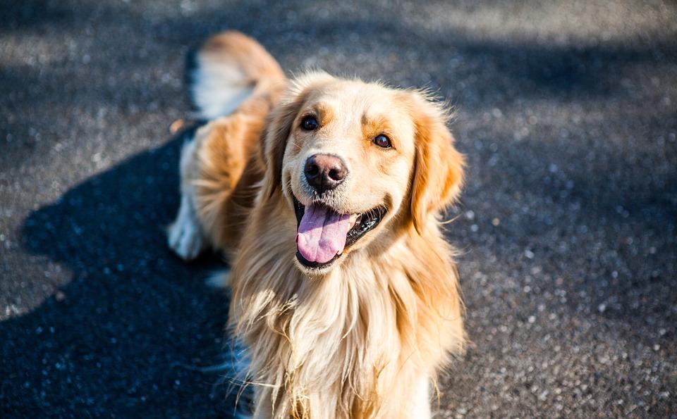 Haustier Hund Tierkommunikation
