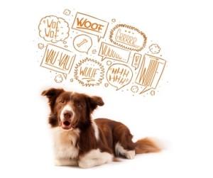 Kommunikation Hund Tierhaltercoaching