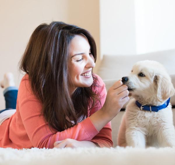 Tier verstehen Hund