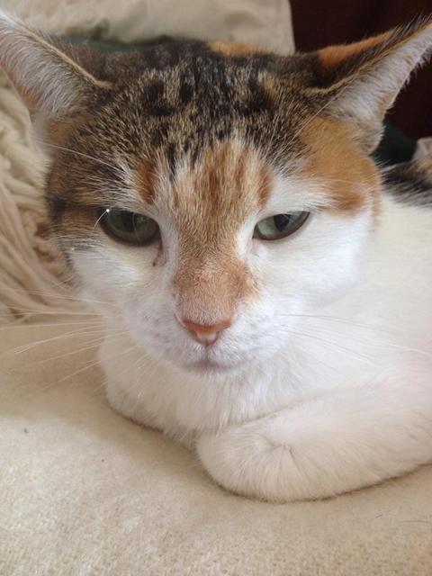 Miezi Trauer Katze
