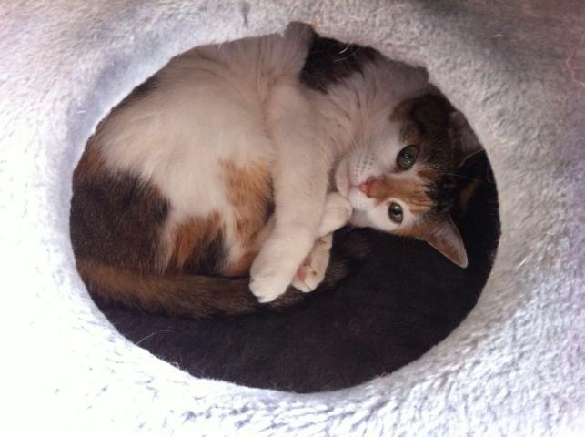 Katze Miezi: Von der Trauer in die Freude