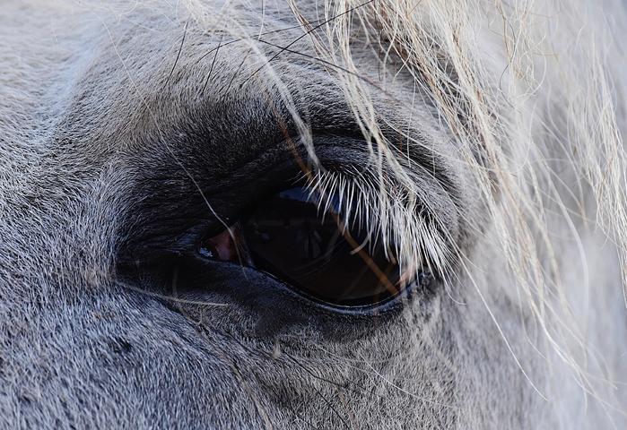 Pferd Wahrnehmung Realität