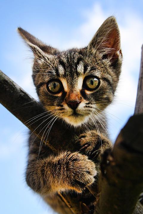 Katze Tierkomunikation Missverständnisse