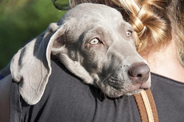 7 Missverständnisse in Bezug auf Tierkommunikation