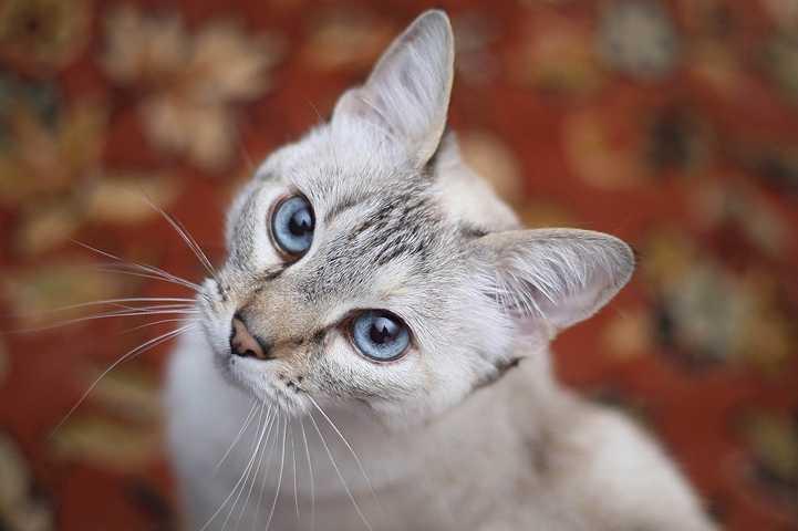 Problemlösung mit deinem Tier: Wenn ein Problem scheinbar nicht besser wird
