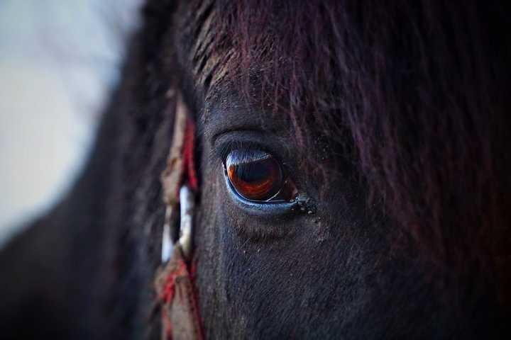 Pferd Problemlösung