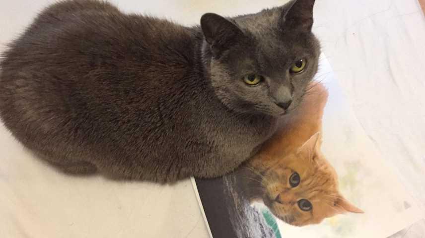 Katzenzusammenführung entspannt gestalten mit Tierkommunikation