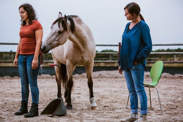 Systemische Aufstellung Familienaufstellung Pferd