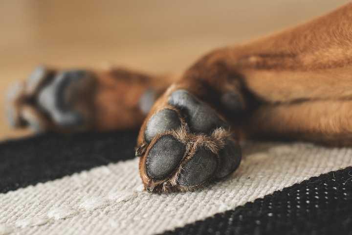Sterbebegleitung Hund Tiere