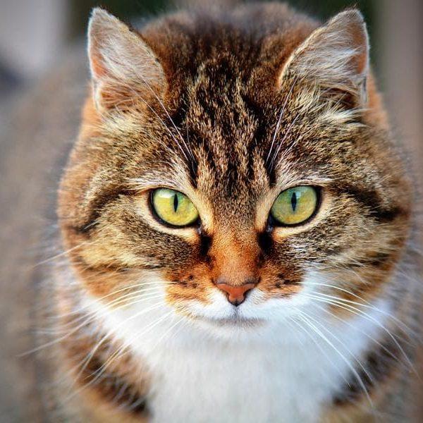 Tiere verstehen Tierkommunikation Katze