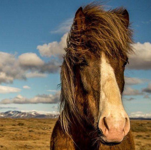Tiere verstehen Tierkommunikation Pferd