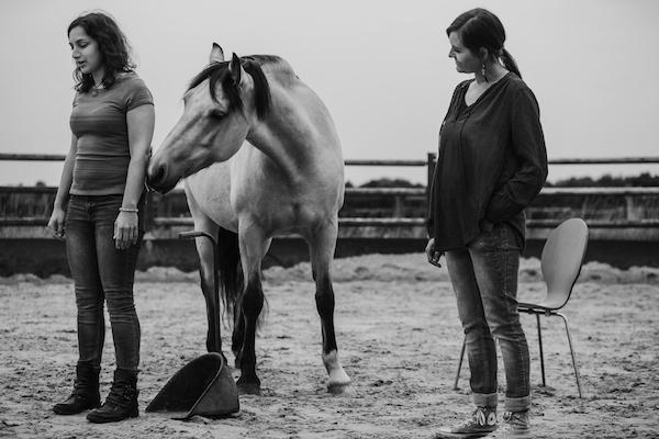 Systemische Aufstellungen Familienaufstellungen Pferd