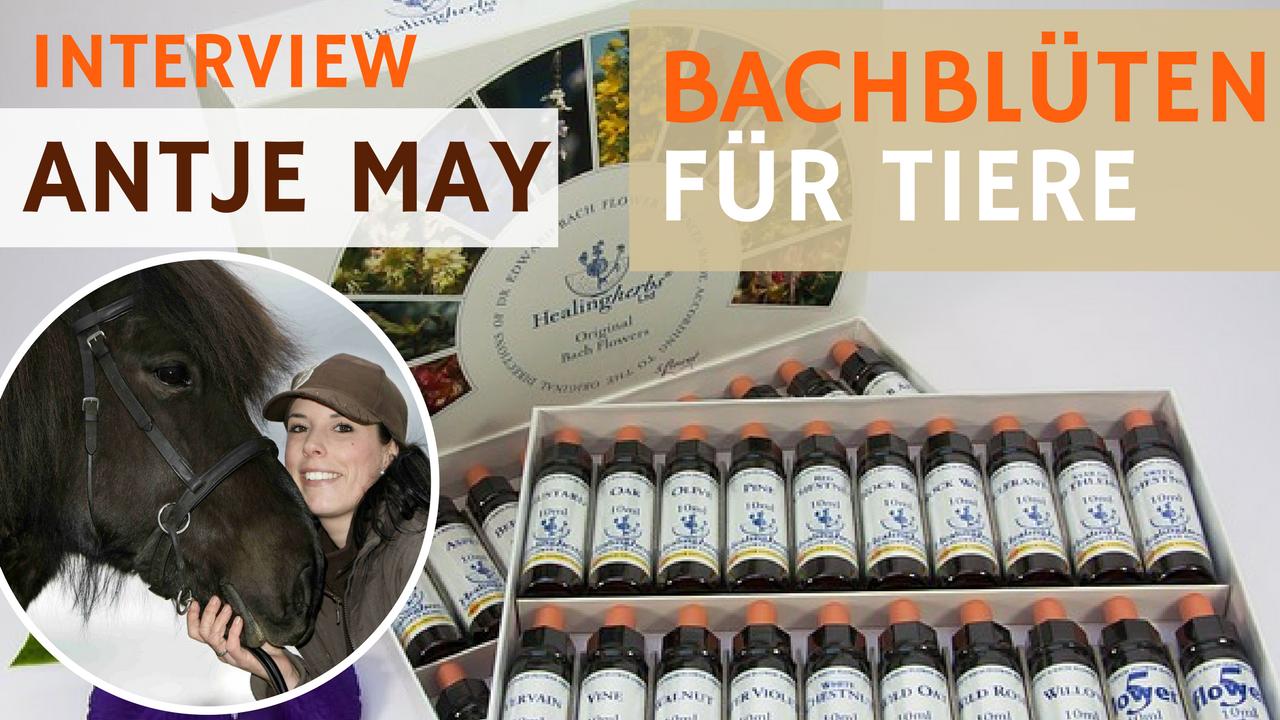 21- Bachblüten für Tiere (Interview mit Antje May)