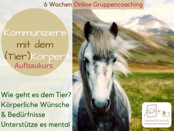 Kommuniziere mit dem (Tier)Körper – Online Gruppencoaching