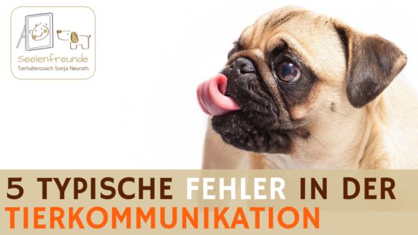 56 – 5 Fehler, die man in der Tierkommunikation machen kann