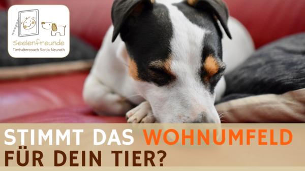 55 – Stimmt das Wohnumfeld für  dein Tier?
