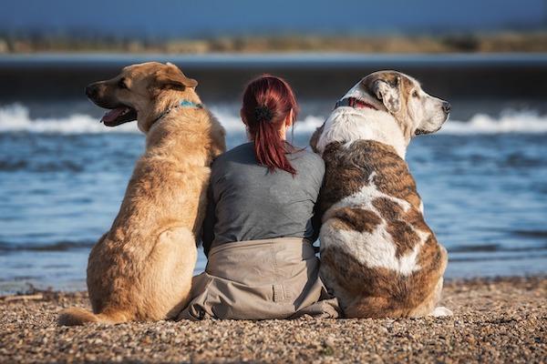 58 – Wie du als Tierhalter mit Zweifeln umgehst