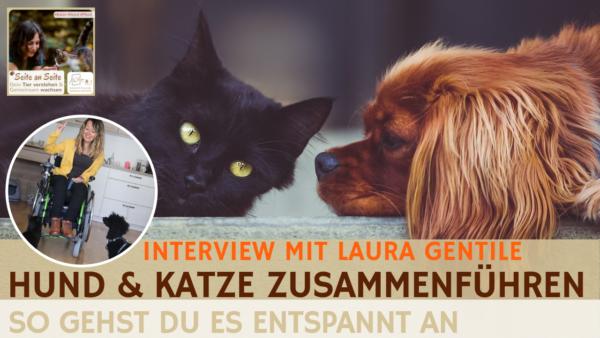 60 – Hund & Katze zusammenführen – So gelingt es (Interview Laura Gentile)