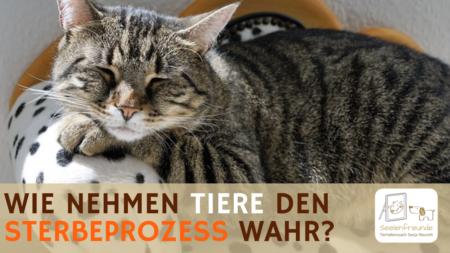 64 – Wie nehmen Tiere den Sterbeprozess wahr?