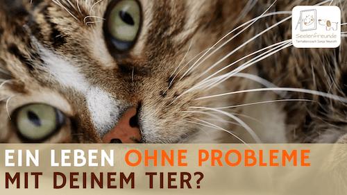 75 – Ein Leben ohne Probleme mit deinem Tier – wie ist das möglich?