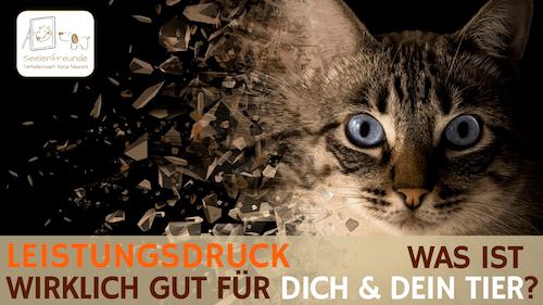 79 – Leistungsdruck – Was ist wirklich gut für dich & dein Tier?