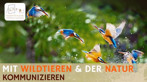 83 – Mit Wildtieren & der Natur kommunizieren