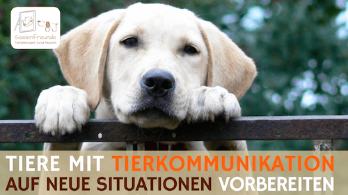 85 – Mit Tierkommunikation auf neue Situationen vorbereiten