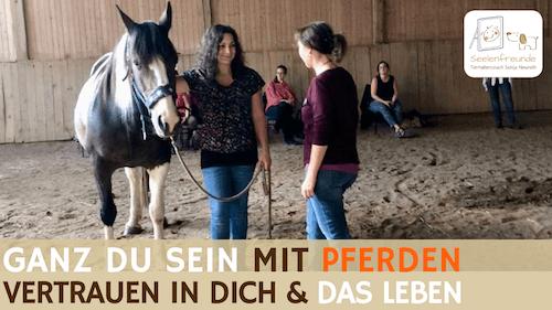 89 – Ganz Du sein: So war ab sofort 100% Du mit Pferden