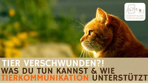92 – Tier verschwunden?! Wie Tierkommunikation unterstützen kann