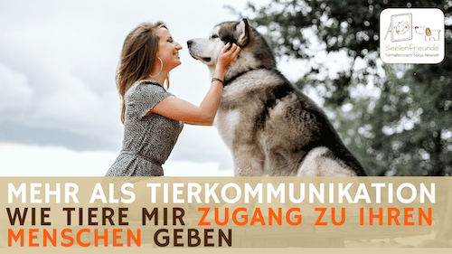 90 – Wie Tiere mir den Zugang zu ihren Menschen geben