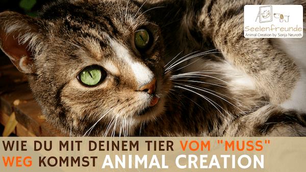 """94 – Animal Creation – Weg vom """"Muss"""" mit deinem Tier – auf euren Weg"""