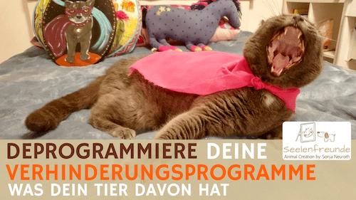 99 – Deprogrammiere deine Verhinderungsprogramme – was dein Tier davon hat