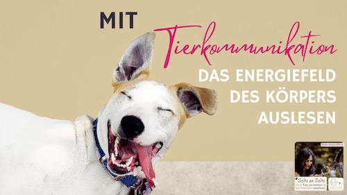 104 – Wie du mit Tierkommunikation das Energiefeld des Tierkörpers ausliest