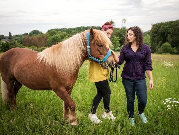 Tier verstehen Pferd Mensch Coaching Animal Creation